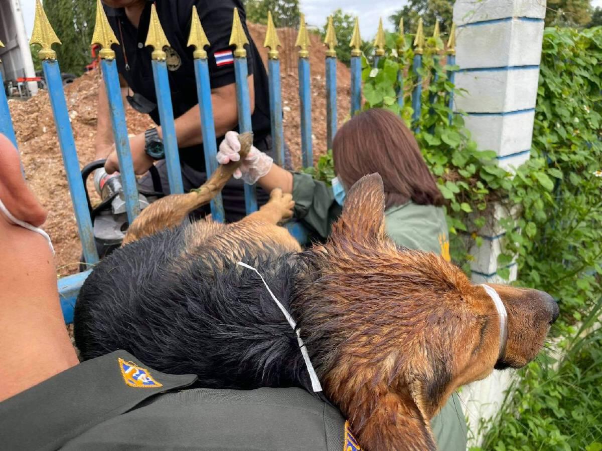 น้องหมาถูกเหล็กเสียบห้อยคารั้วกู้ภัยช่วยรอดชีวิต