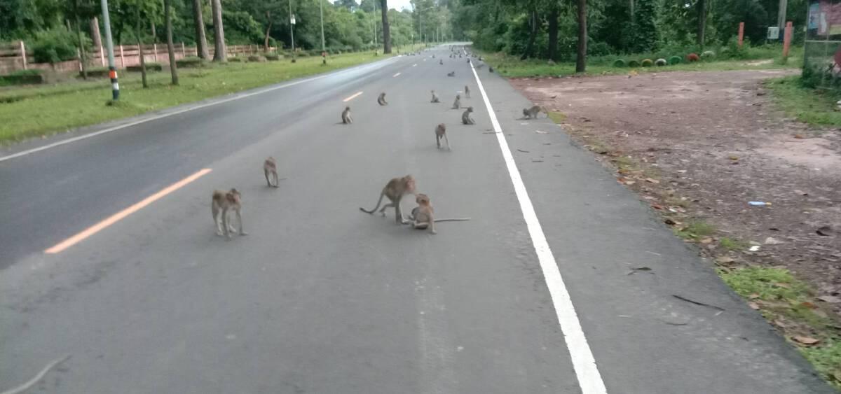 พายุเตี้ยนหมู่ส่งผลให้ฝูงลิงขาดอาหารหิวโซ