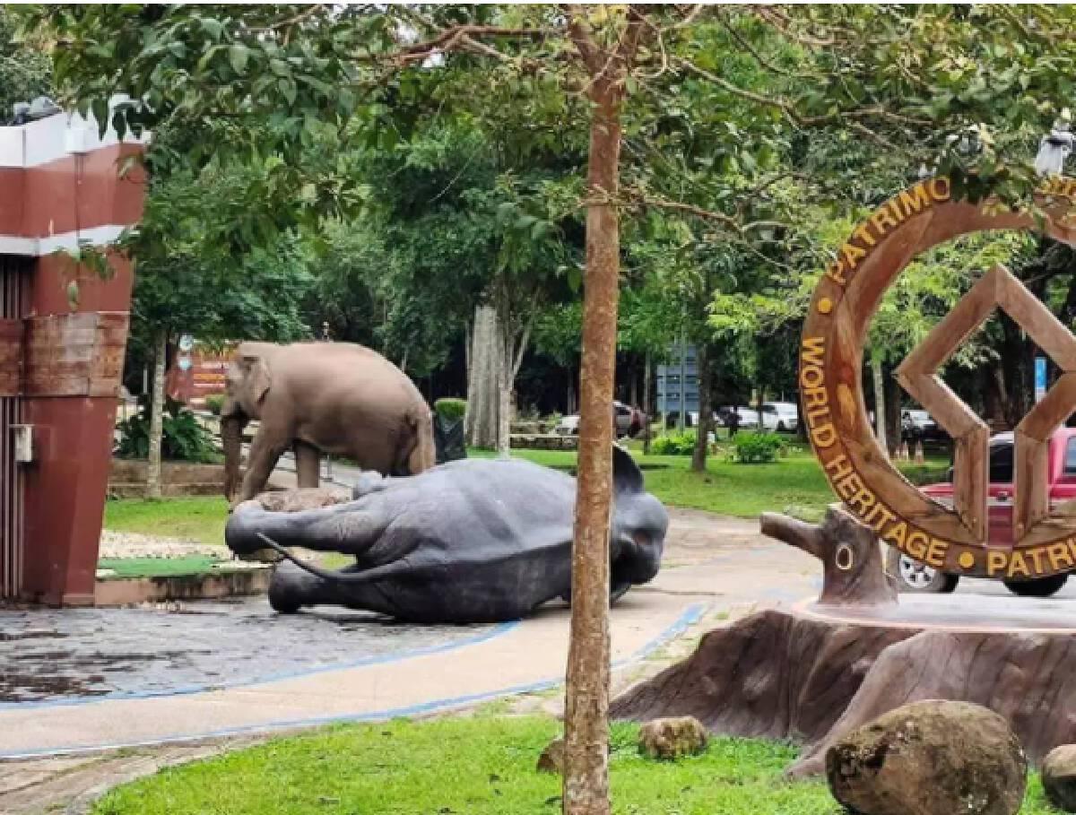 """""""พลายปูน"""" กลับมาแล้ว หลังถูกพลายเดี่ยวช้างเขาใหญ่คว่ำไม่เป็นท่า"""