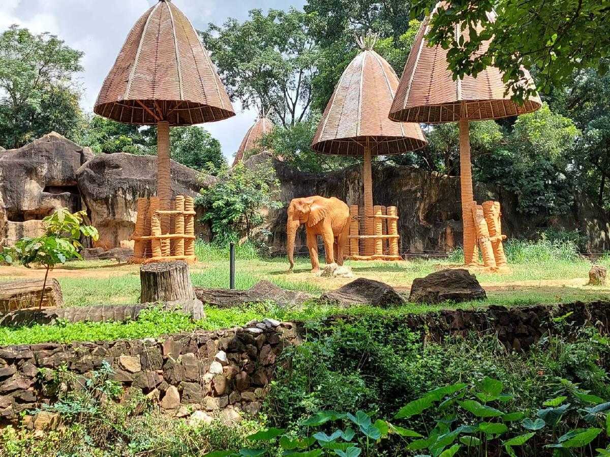 สวนสัตว์โคราช ชวนปชช. ร่วมอุปถัมภ์สัตว์ป่า  สมทบทุนค่าอาหาร