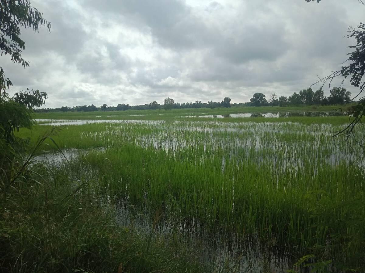 ฝนหยุดแล้วน้ำชีทะลักเริ่มทรงตัว เตรียมสำรวจความเสียหาย
