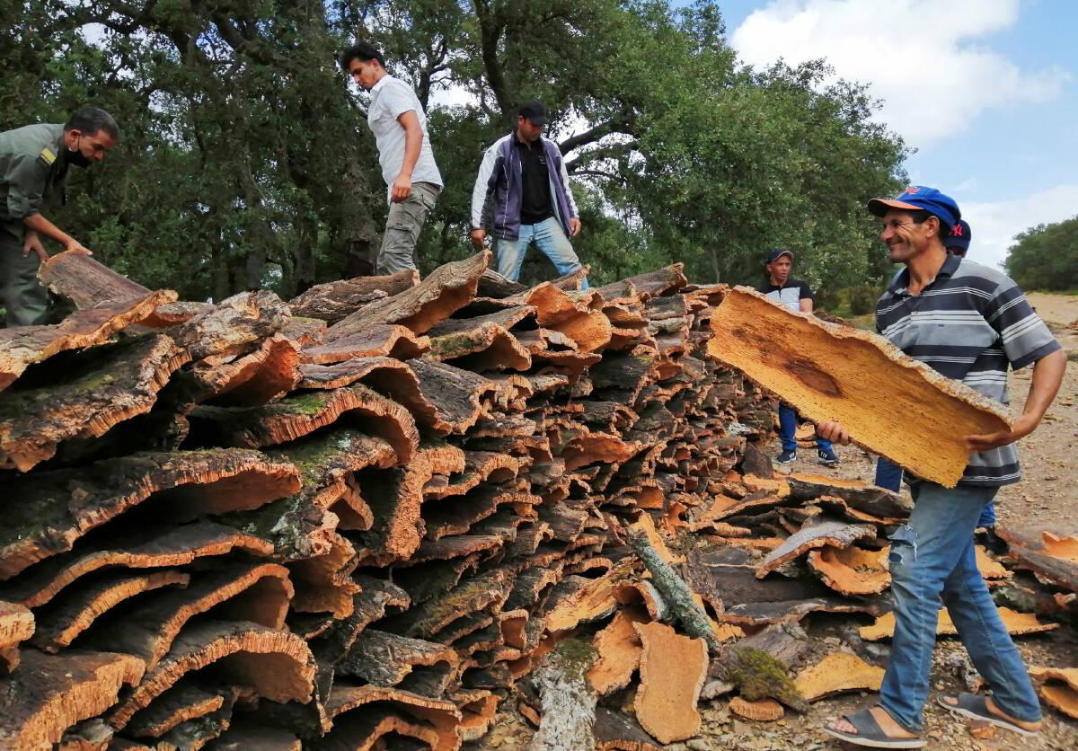 ไฟป่าทำอุตสาหกรรมไม้ก๊อกตูนีเซียเสียหาย