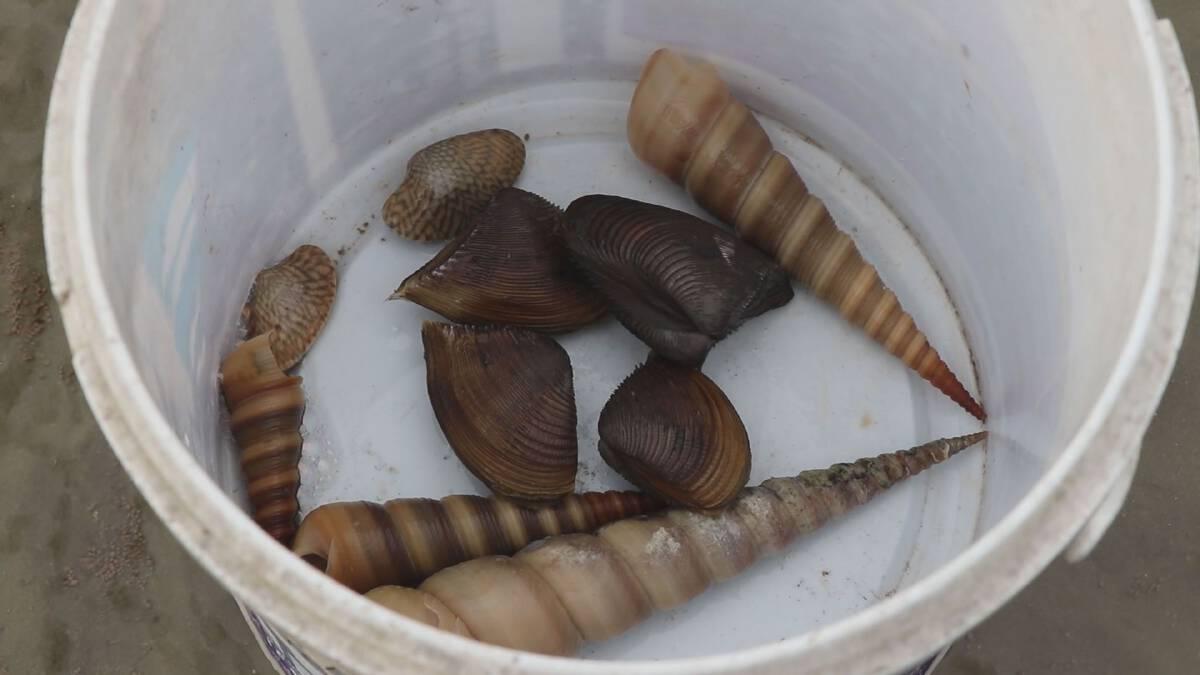 หาดปากเมงทะลัก! หอยตะเภา ทำเงิน 350 บาท/กก.