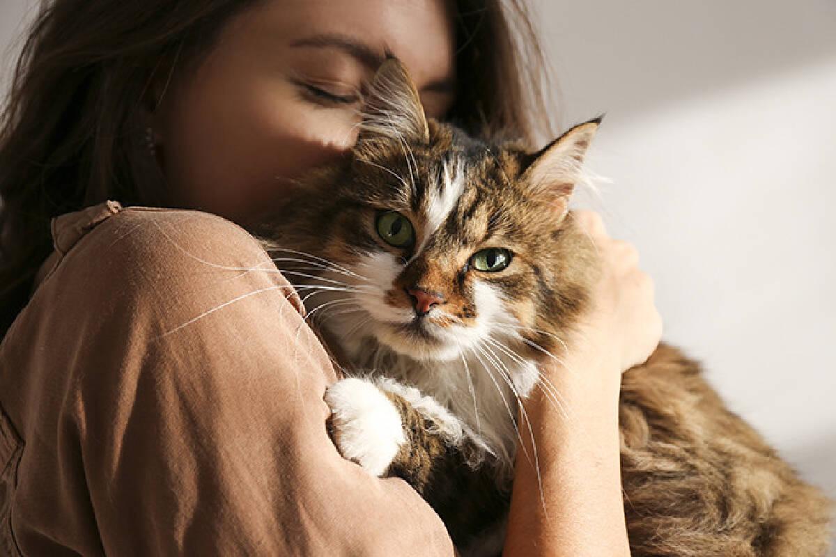 มองโกเลีย พบแมวเลี้ยงติดเชื้อโควิด-19