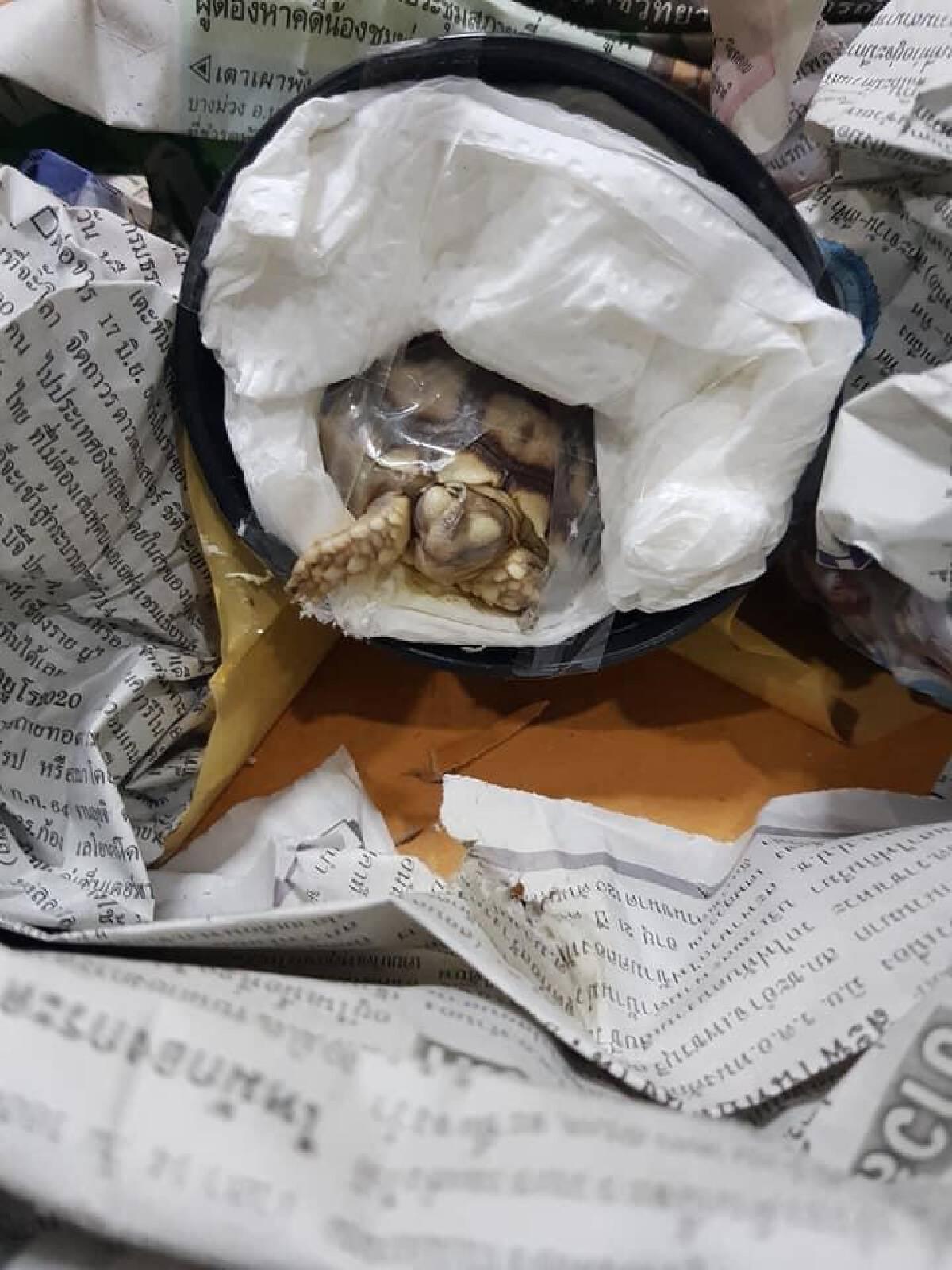 """ไปรษณีย์ไทย แจง ไม่ได้รับส่ง """"เต่าซูลคาตา"""" ที่กำลังเป็นดรามา"""