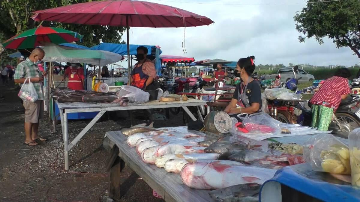 ตลาดเช้าเขื่อนเจ้าพระยาคึกคัก ปลาช่วงน้ำหลากขายราคาถูก