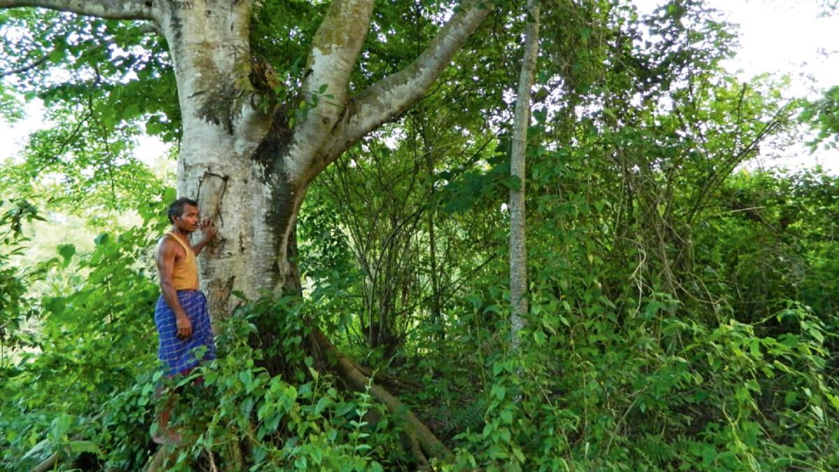 จาดาฟ ปาเยง ผู้อุทิศเวลากว่า 40 ปีเพื่อปลูกต้นไม้