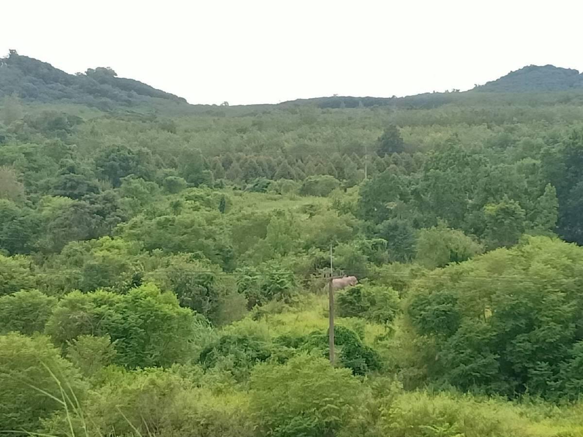 """เคลื่อนย้ายช้างป่า """"พลายงาเก"""" ถึงเขตรักษาพันธุ์สัตว์ป่าเขาอ่างฤาไนแล้ว"""