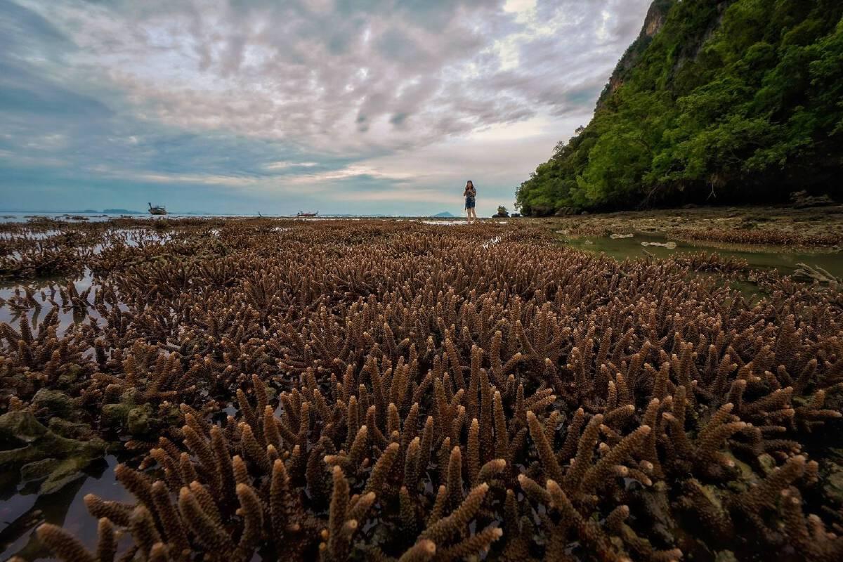 งดงามไร้ที่ติ ทุ่งปะการังอ่าวไร่เล จ.กระบี่